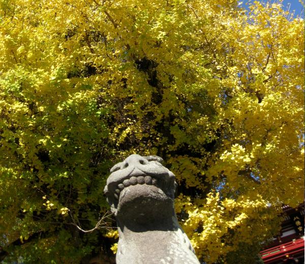 鶴岡八幡宮はパワースポット?歴史と見どころを解説!