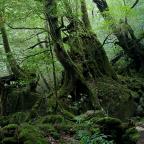 屋久島のハートは恋愛に効く?縄文杉や神社と観光について