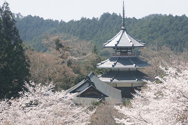 奈良の世界遺産「吉野山」まとめ|金峯山寺・桜・奥千本