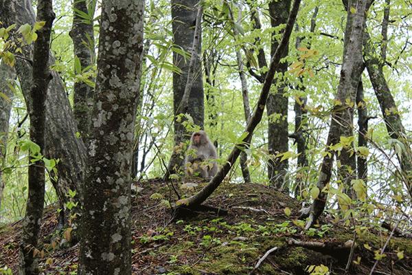 世界遺産、白神山地の森は世界最大級のヒーリングスポット